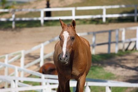 Speciális terápia – lovasterápia